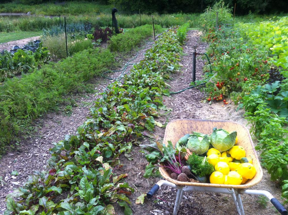 Endless gardens edible gardens vegetable herb and for Fruit and vegetable garden